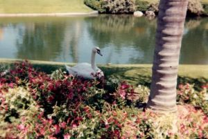 In 1988 I continue to take pictures of birds!