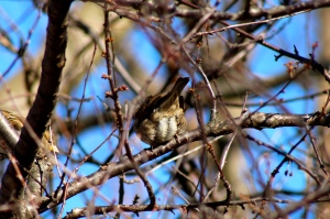My first clearly focused picture of a bird is the derrière of a house-sparrow.
